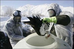 ماموران دامپزشکی ایران در حال معدوم کردن پرندگان آلوده در سال 2006 - رویترز