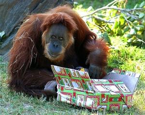 نونجا در باغ وحش میامی