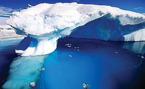 رنگ یخی قطبی همشهری آنلاین: به سوی جنوب