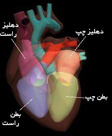 ساختمان قلب