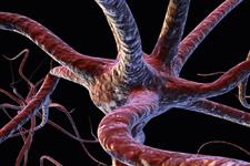 نورن یا سلولتخصصیافته مغز
