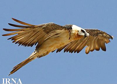 چسب پرنده 10 تا از زیباترین و عجیب ترین پرنده های دنیا.
