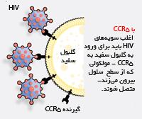گیرنده سیسیآر5 راه ورود ویروس ایدز به گلبول سفید است