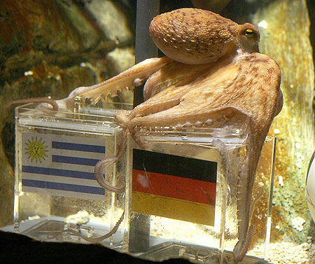 An octopus named Paul sits on a box with decorated with a German flag and a shell inside on July 9, 2010 at the Sea Life aquarium in Oberhausen, western Germany. Paul's task is to decide in favour of one of the shells hidden in boxes with the flags of Germany (R) and Uruguay to act thus as oracle for the upcoming 'small final', the third-place play-off game, of the FIFA Football World Cup between the two countries on July 10, 2010 in Port Elizabeth, South Africa. Paul, the 'psychic' octopus, who had predicted well the result of six matches earlier in the tournament, this time decided for German