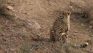 عکس: سام خسروی فرد (cheeta)